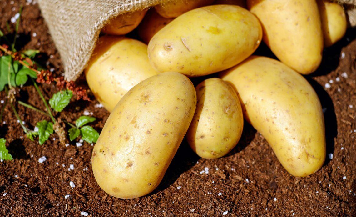 najwięksi producenci ziemniaków